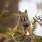 Red squirrel with pine cone by Jim Cumming