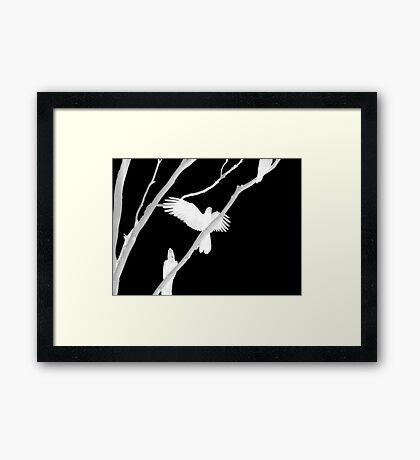 Birds in Black and White Framed Print