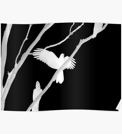 Birds in Black and White Poster