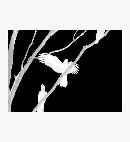 Birds in Black and White Photographic Print