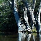 rivers edge by stickelsimages