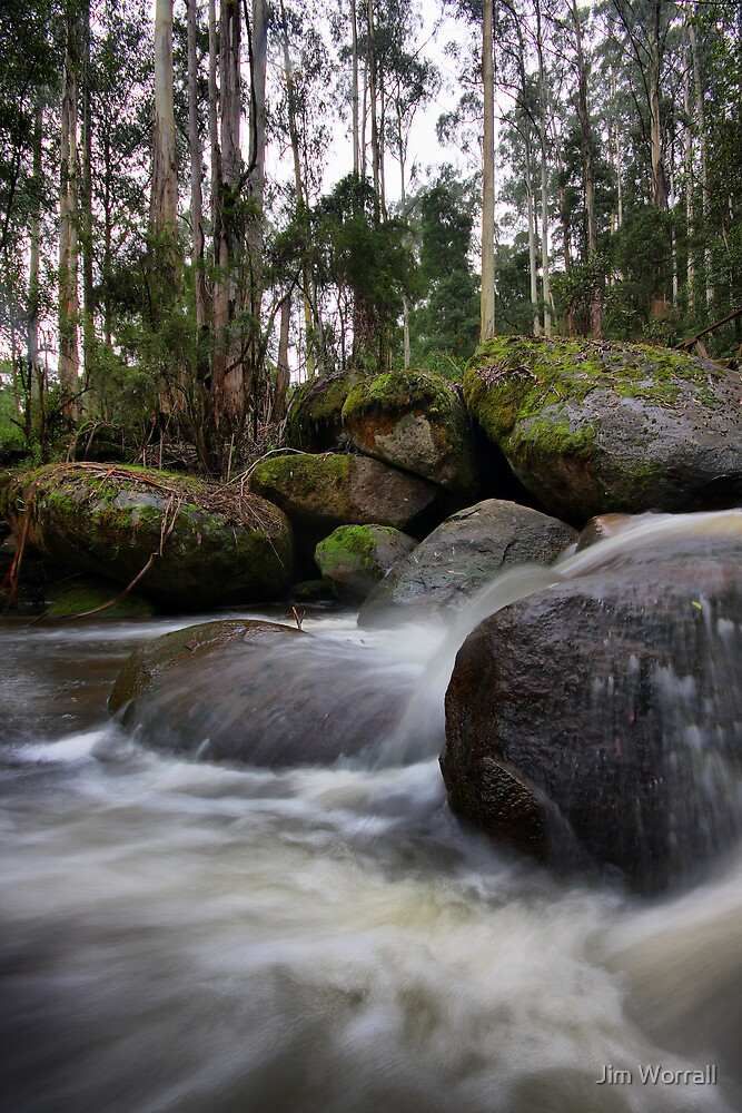 Milk of the Forest - Toorongo River by Jim Worrall