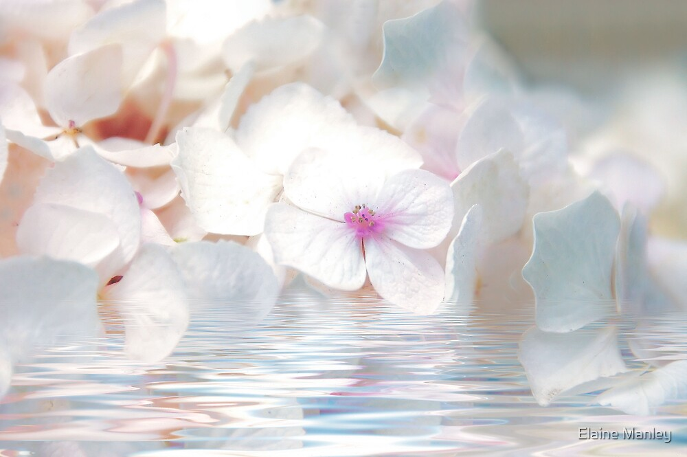 Sea of White  by Elaine Manley