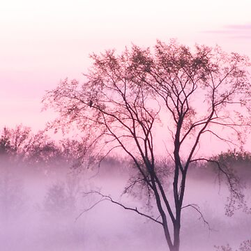 Fog at Dawn (Purple) by colorstorm