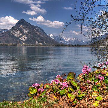 On Lake Thun by rosiczka