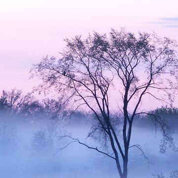 Fog At Dawn (Blue) by colorstorm