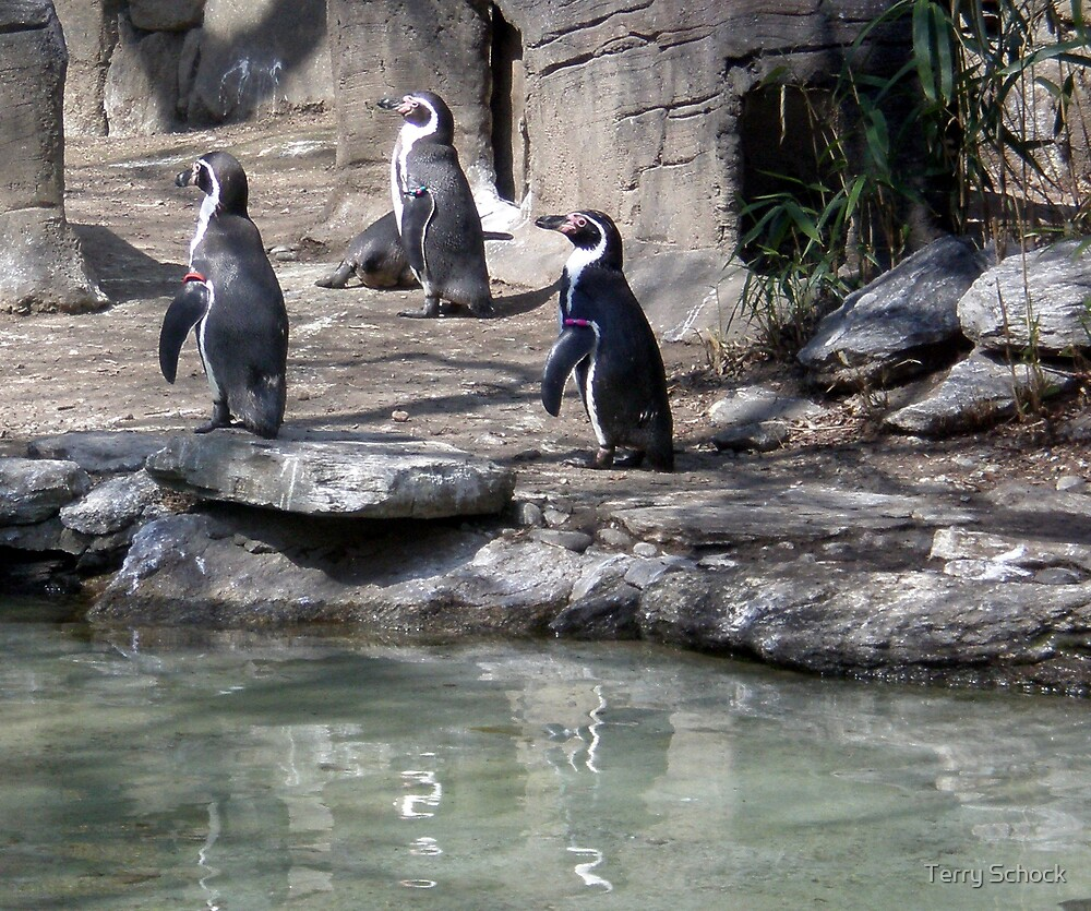 Happy Feet by Terry Schock