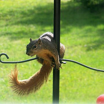 Squirrel on Bird Feeder by deleas
