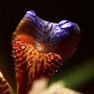 Natures Dragon by Cheri Bouvier-Johnson