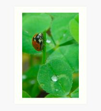 Lady Bug on a leaf Art Print
