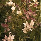 Sweetpeas. by mariarty
