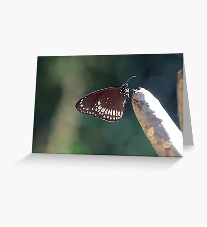 Butterfly in the garden Greeting Card