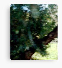 Tree Elf DMT Canvas Print