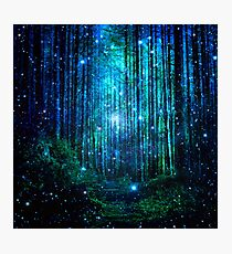 In the magical Forest Photographic Print