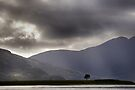 The Lonely Tree - Highlands of Scotland by Richard Flint