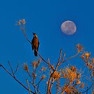 The Early Bird by HG. QualityPhotography
