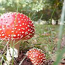 Chestnut Toadstool by dianegreenwood