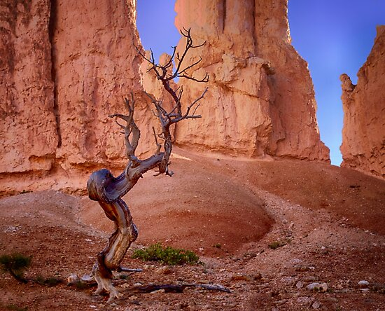 Tree in Bryce Canyon by Kathy Weaver