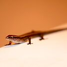 Skink in the Sink. by Leigh Nelson