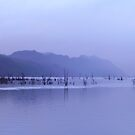 rainy dusk at Lake Macintosh, Tullah by gaylene