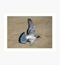 Pigeon in Flight Art Print