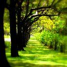 I walk a lonely road by Ritu Lahiri