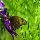 """""""Just living is not enough,"""" said the butterfly, """"one must have sunshine, freedom and a little flower."""" by Ritu Lahiri"""