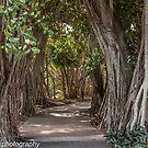 Walk Among the Banyan Trees by John  Kapusta