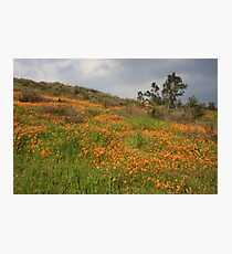 Carpeted With Poppies Photographic Print