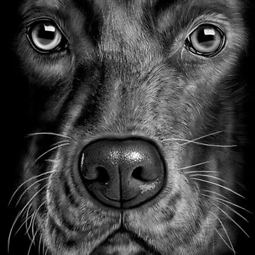 black lab dog by LeoZitro