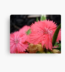 Flowers Dressed in Pink Canvas Print