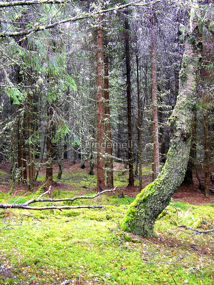 Black Woods of Rannoch by Lindamell