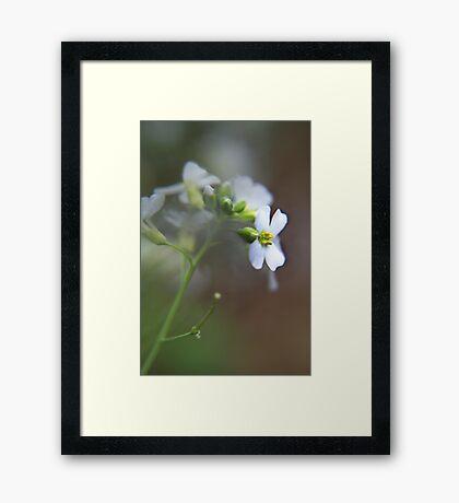 White wild flower Framed Print