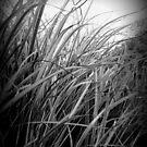 Reeds by Oranje