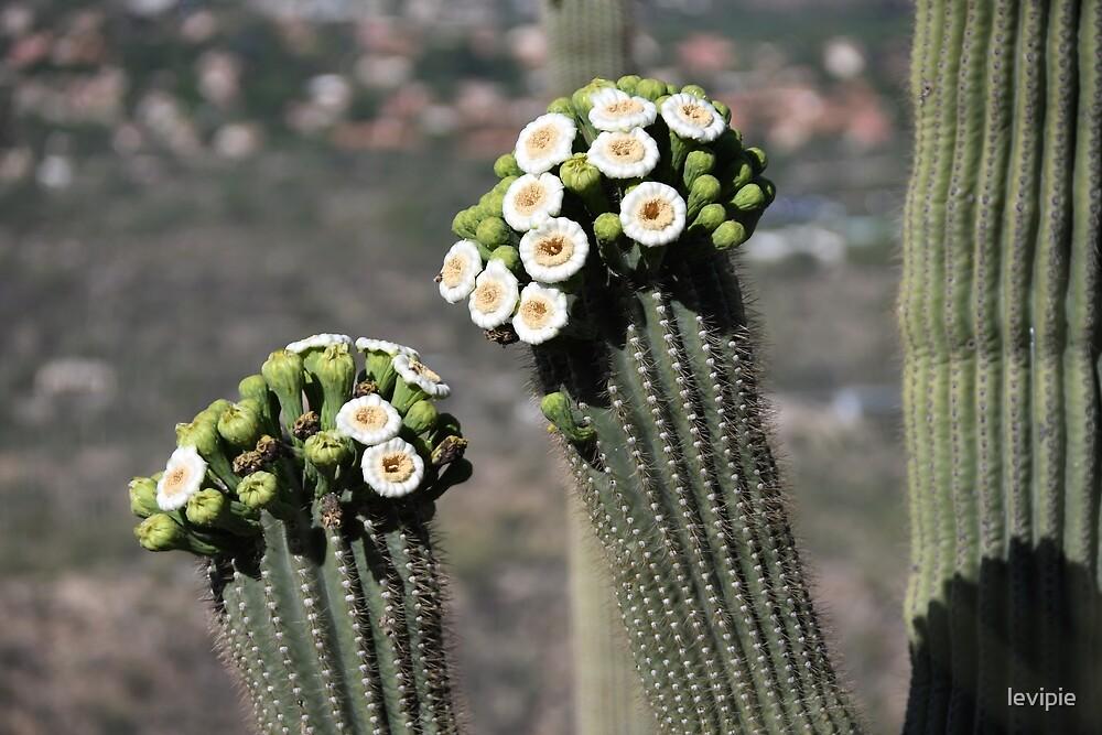 Desert Bouquet by levipie
