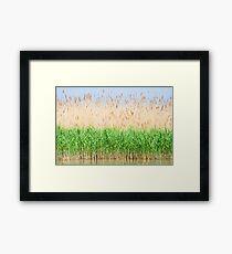 Reed Framed Print
