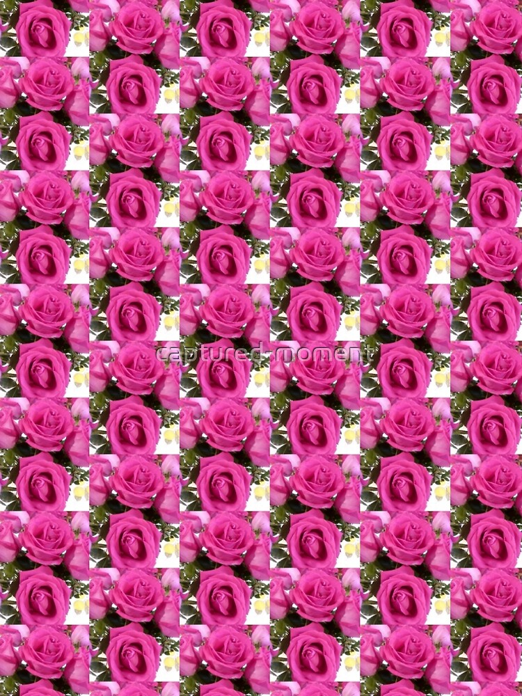 Hot Pink Roses by captured-moment