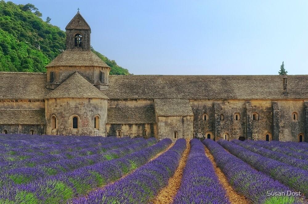 Lavender Grow By Monks At L'abbaye de Sénanque by Susan Dost