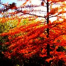 Red Tree by Oranje