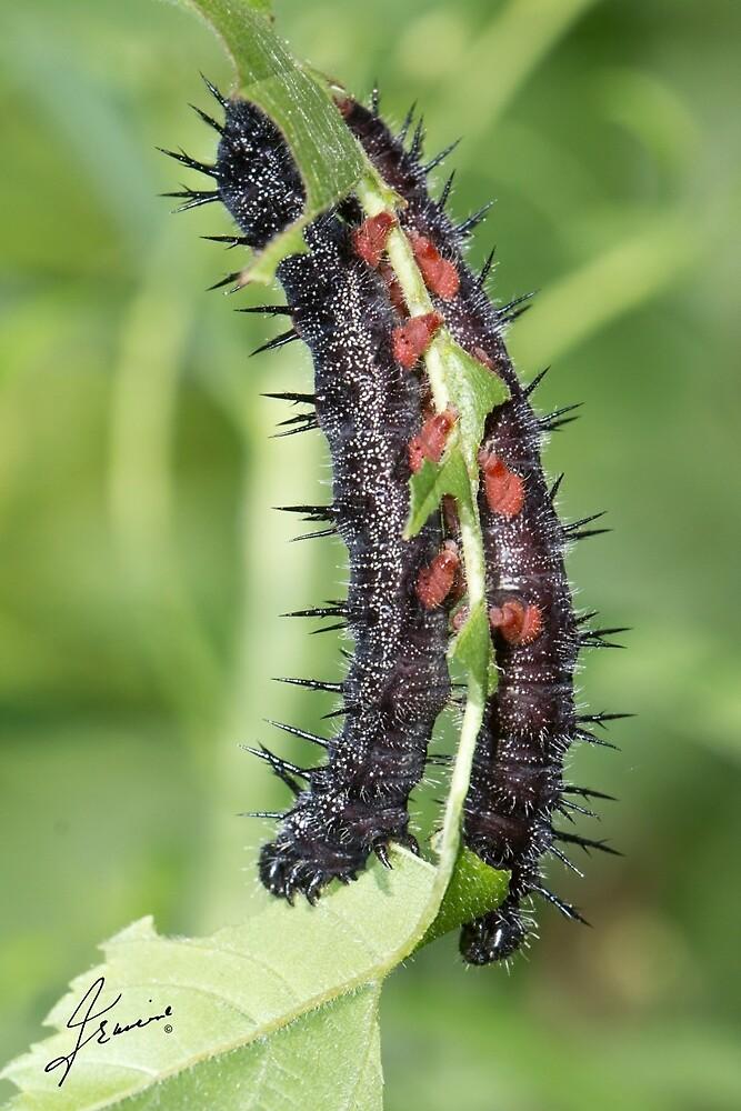 Mourning Cloak Butterfly Caterpillar by DigitallyStill