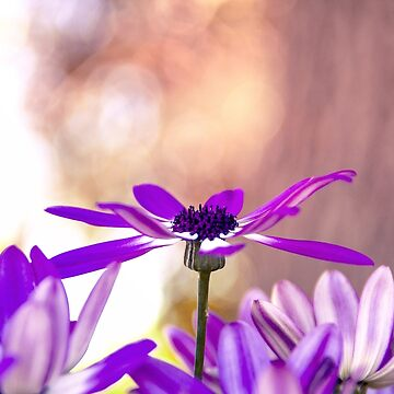 Purple in the Air by Spottedlongneck