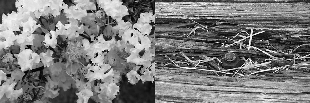 Contrasting Diptych by Karmamatsu
