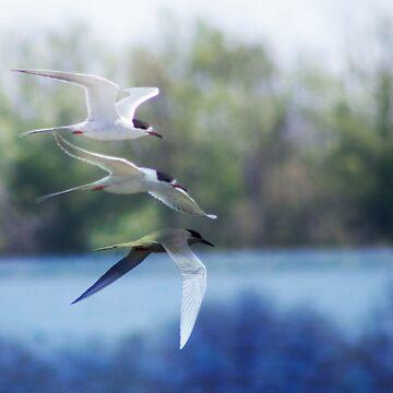 Bird Flight by Tr0y