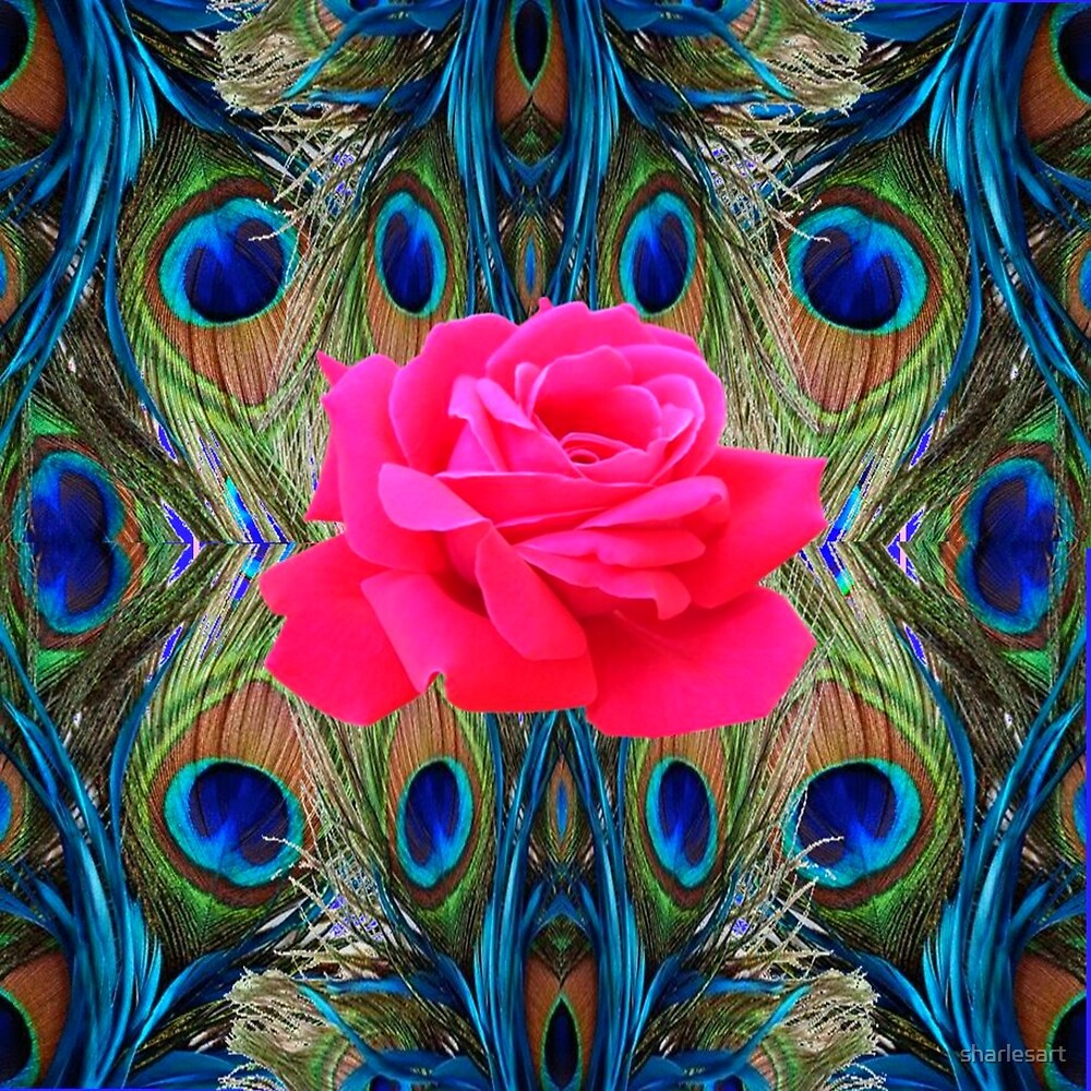 FUCHSIA PINK ROSE & BLUE PEACOCK FEATHERS ART by sharlesart