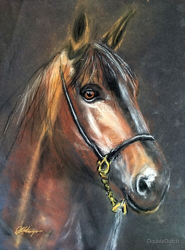 Boysey the Bay Horse by DoubleDutch