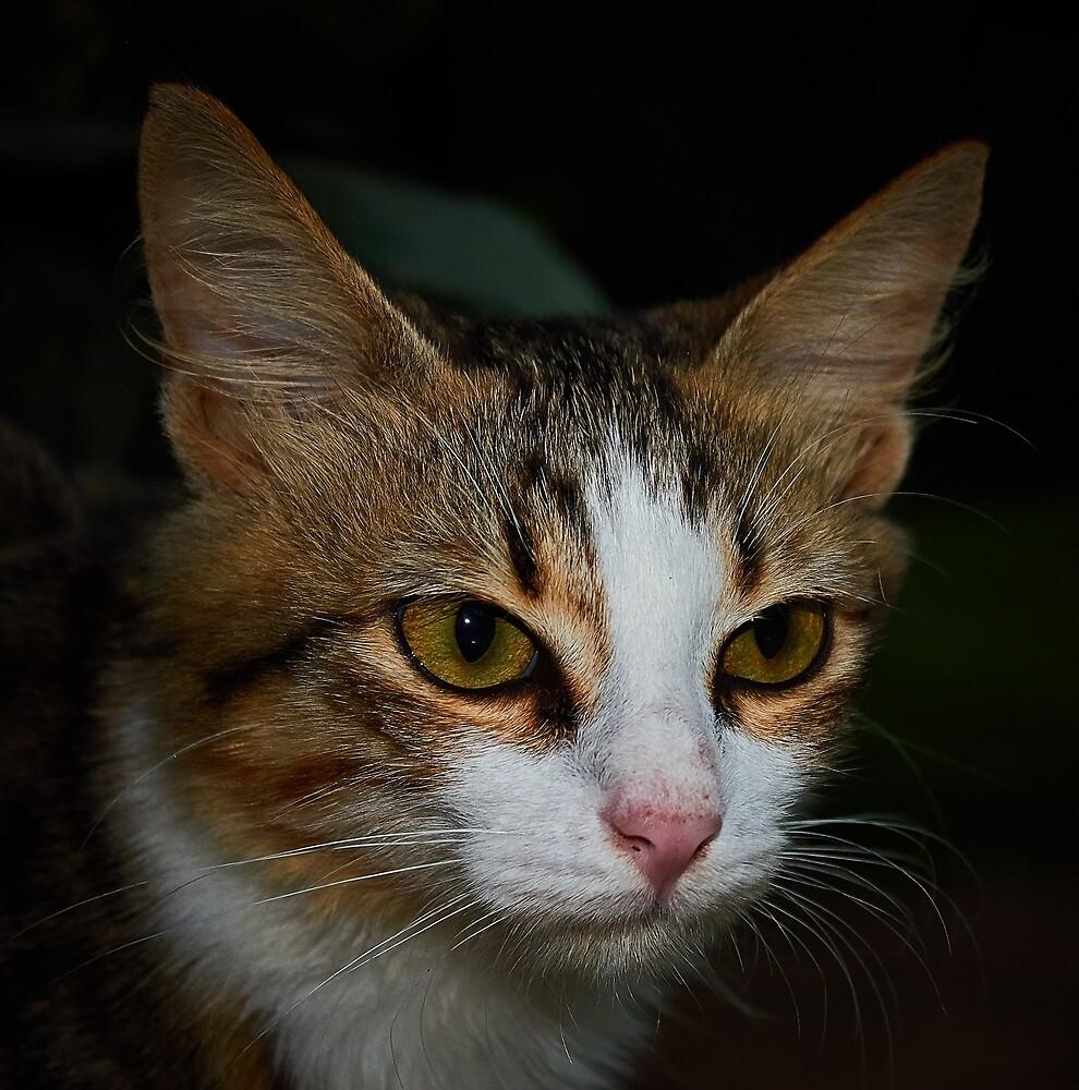 Mr Frank The Cat by Ainainy
