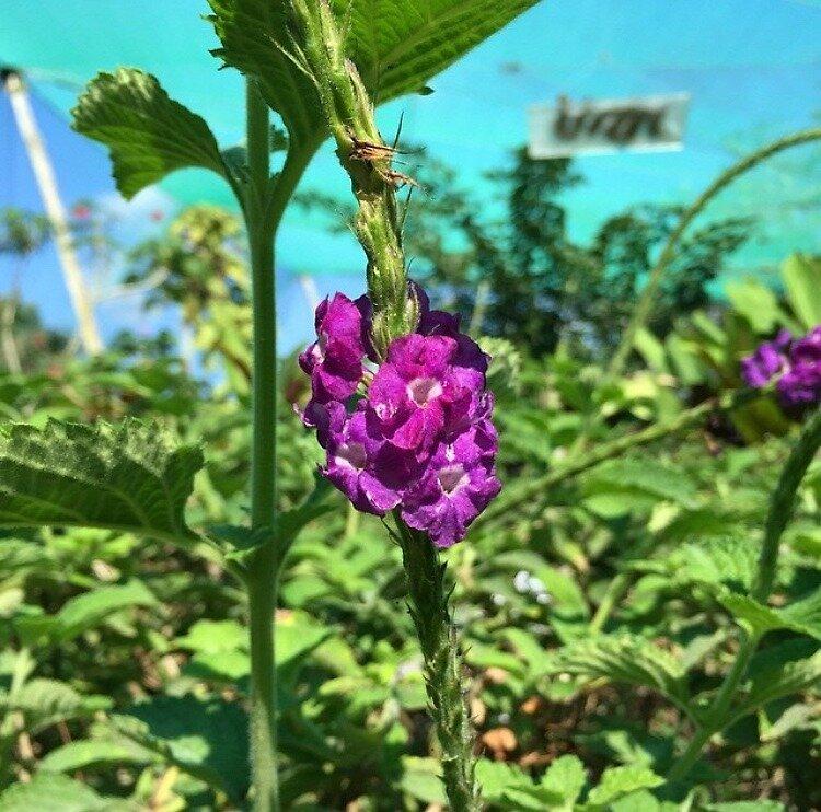 Costa Rican Flower by rach3x9