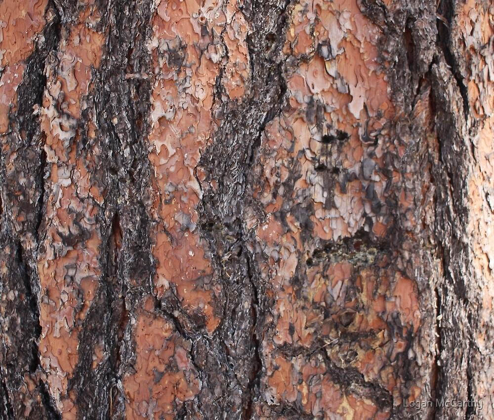 Red and Grey Bark 3 by Logan McCarthy