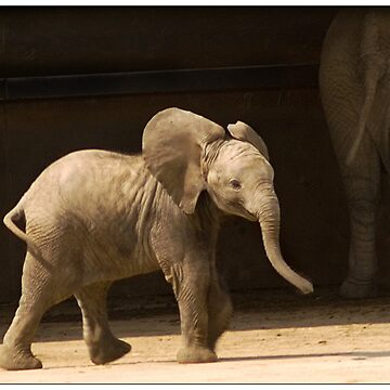 Baby Elephant by Knobrot