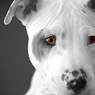 Freckles the Pit by Susanne Correa